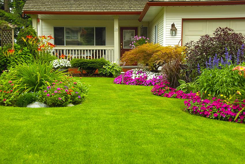 Tuin gerenoveerd en onderhouden